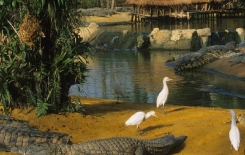 Location de vacances - Mas à Chantemerle-lès-Grignan - la Ferme aux Crocodiles