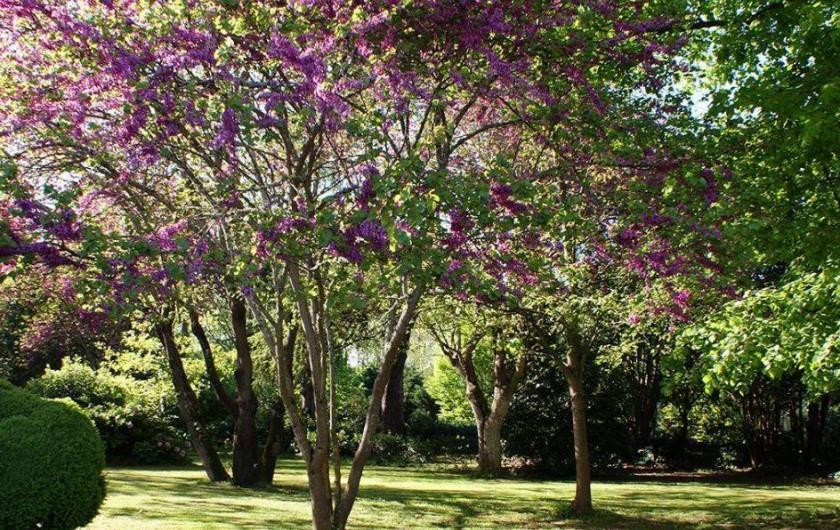 Location de vacances - Chambre d'hôtes à Saint-Léger - Parc fleuri