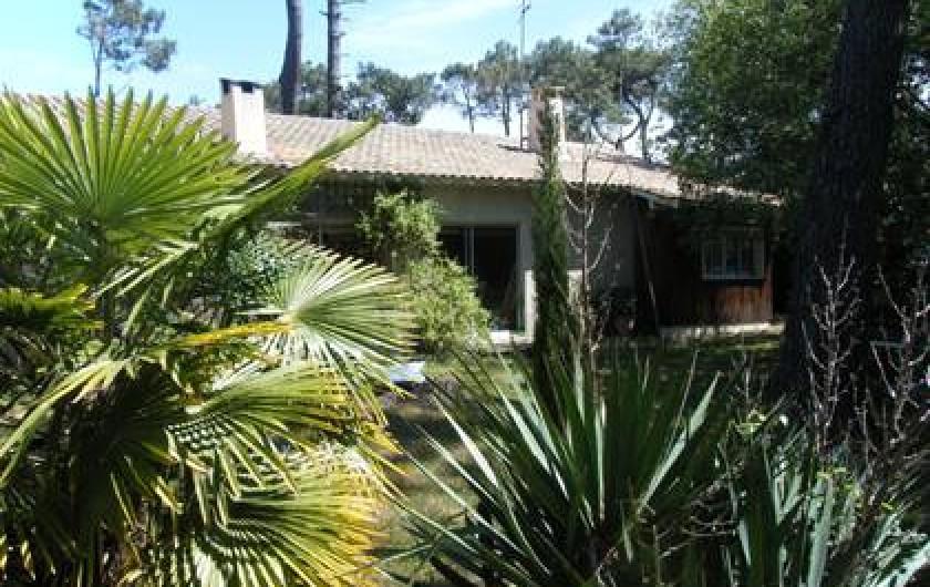 Location de vacances - Villa à Le Cap Ferret - Vue depuis le jardin