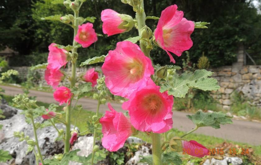 Location de vacances - Chambre d'hôtes à Grimault - Roses trémières du jardin
