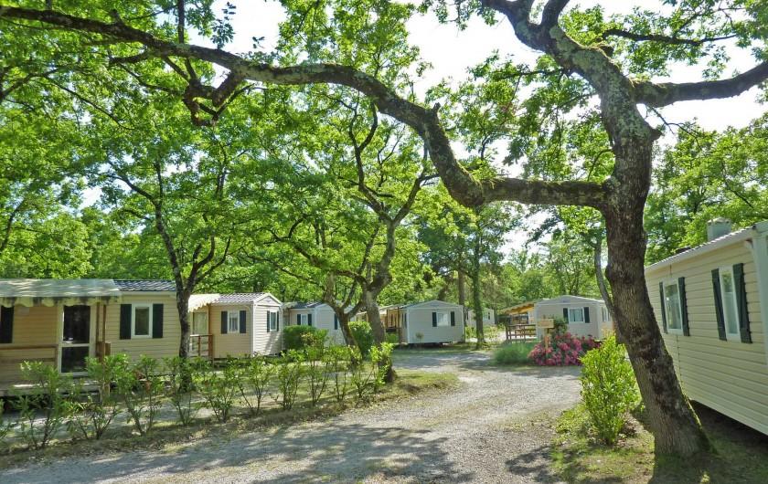 Location de vacances - Bungalow - Mobilhome à Thonon-les-Bains - Parc arboré de 12 ha