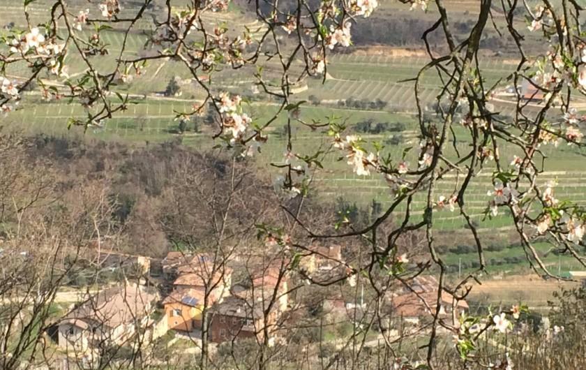 Location de vacances - Maison - Villa à Marano di Valpolicella - Vue  en contrebas à travers l'amandier
