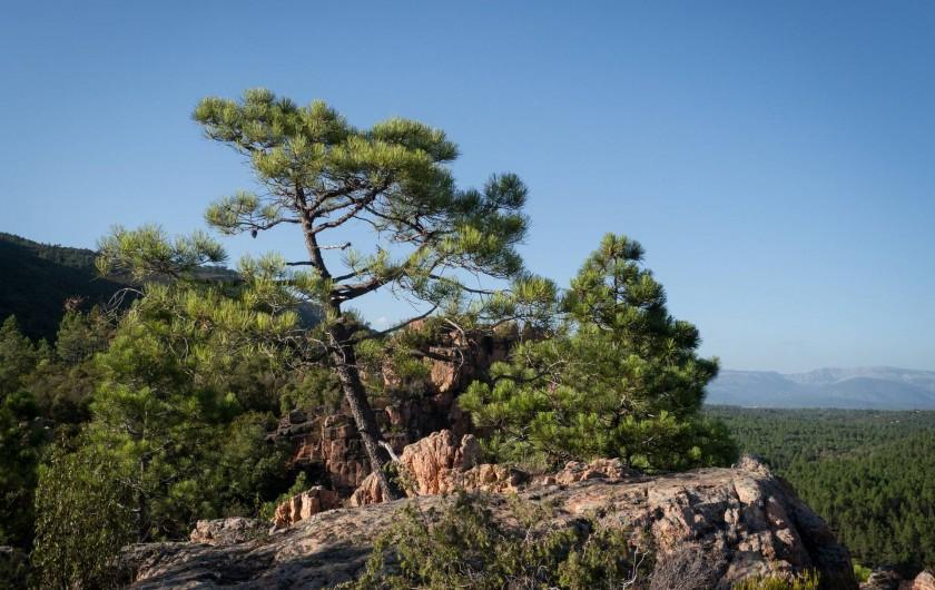 Location de vacances - Mas à Bagnols-en-Forêt - Les belles balades