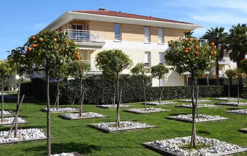 Location de vacances - Appartement à Antibes - L'appartement donne sur ce jardin d'orangers