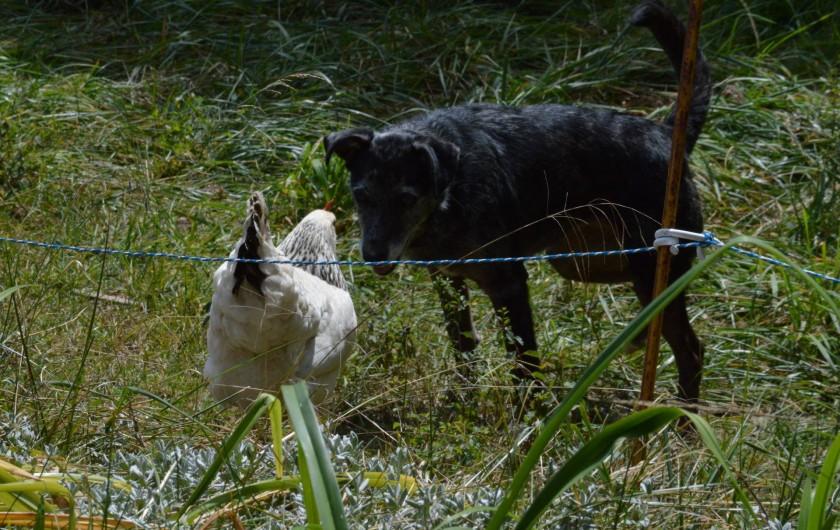 Location de vacances - Camping à Meyrueis - nos animaux en grande discussion...