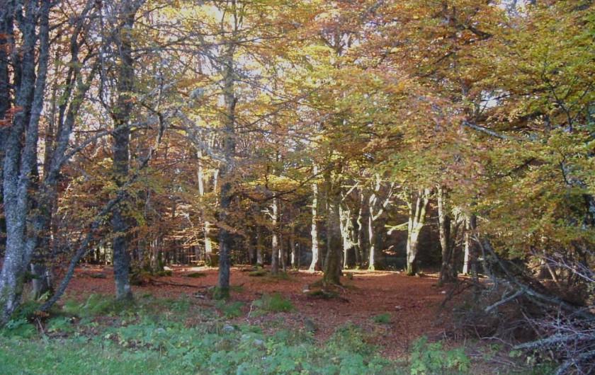 Location de vacances - Appartement à Orbey - Les environs en automne