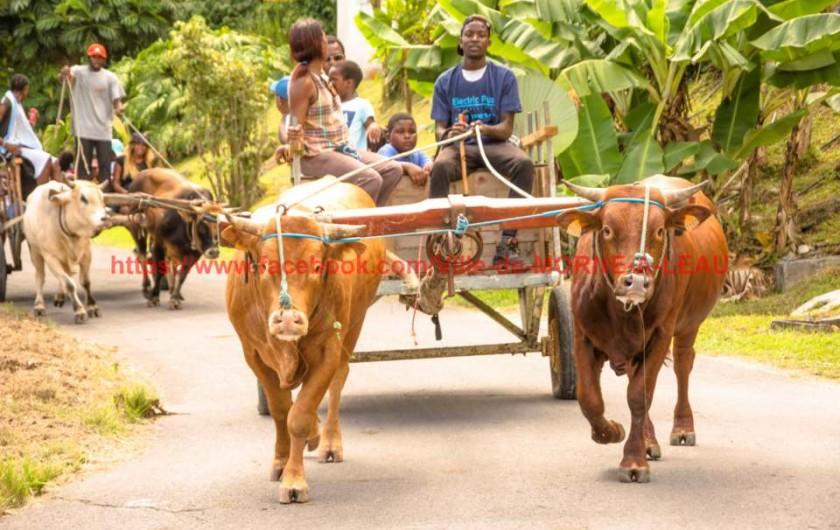 Location de vacances - Villa à Morne-À-l'Eau - Promenade en charrette à bœufs à la demande