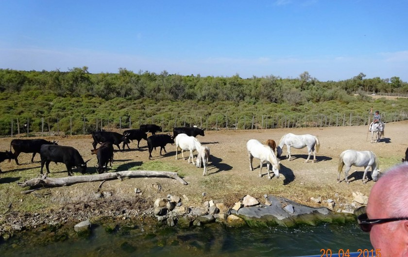 Location de vacances - Appartement à Lunel - la camargue, possibilité de faire du cheval