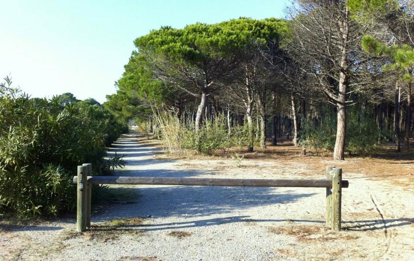 Location de vacances - Villa à Le Barcarès - Pinède