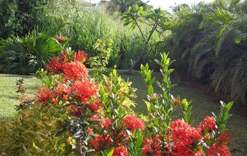 Location de vacances - Bungalow - Mobilhome à Deshaies - jardin tropical