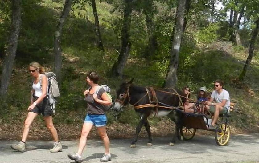 Location de vacances - Chambre d'hôtes à Niozelles - ballade avec les ânes du relais d'elle déjeuner sur l'herbe