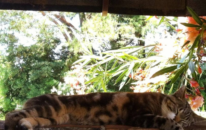 Location de vacances - Appartement à Cecina - notre chat