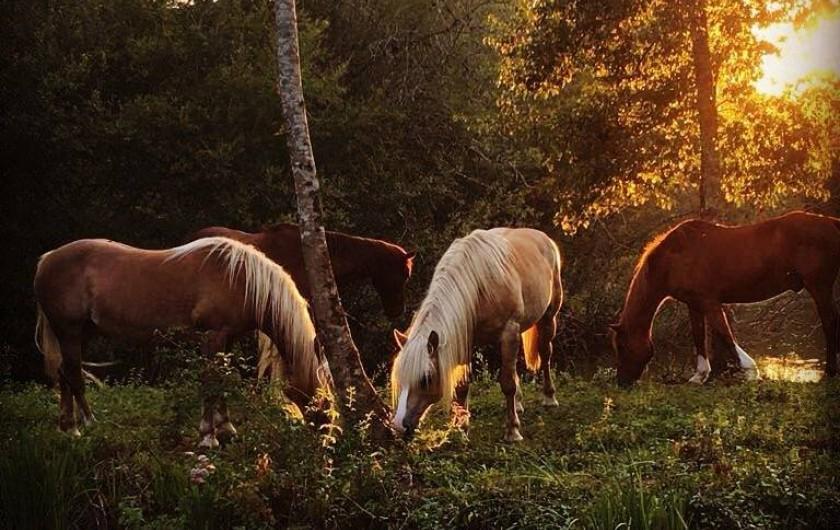 Location de vacances - Maison - Villa à Payrac - les chevaux du colombé