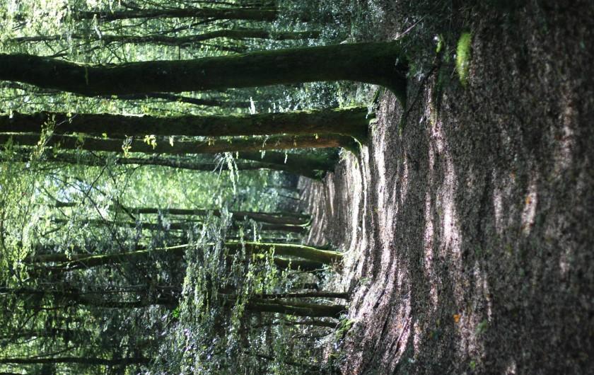 Location de vacances - Gîte à Châgnon - chemin de randonnée près du gite