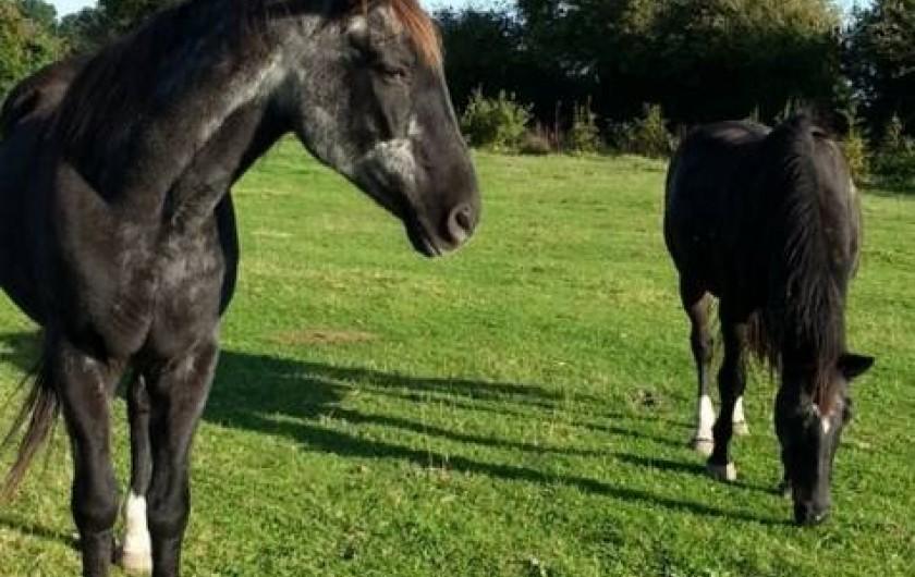 Location de vacances - Gîte à Sept-Frères - les chevaux