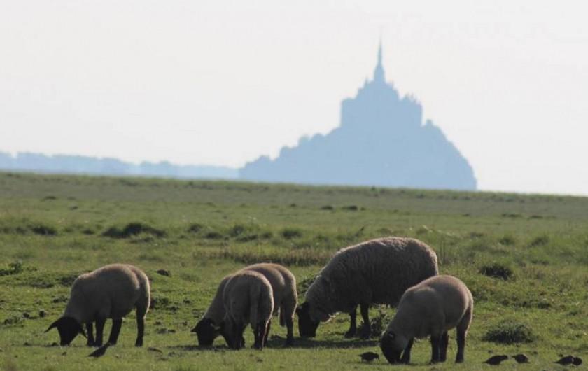 Location de vacances - Gîte à Sept-Frères - les pré salés du Mt St Michel