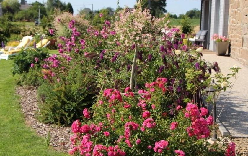 Location de vacances - Gîte à Sept-Frères - massif de fleurs