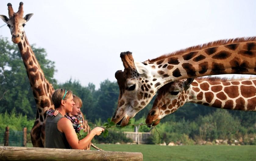 Location de vacances - Insolite à Hermival-les-Vaux - Safari Girafes