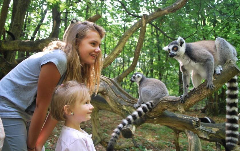 Location de vacances - Insolite à Hermival-les-Vaux - Safari Lémuriens