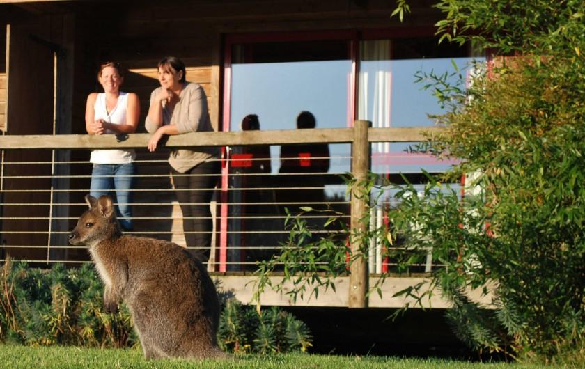 Location de vacances - Insolite à Hermival-les-Vaux - Terrasse Lodges et Lodges Premium