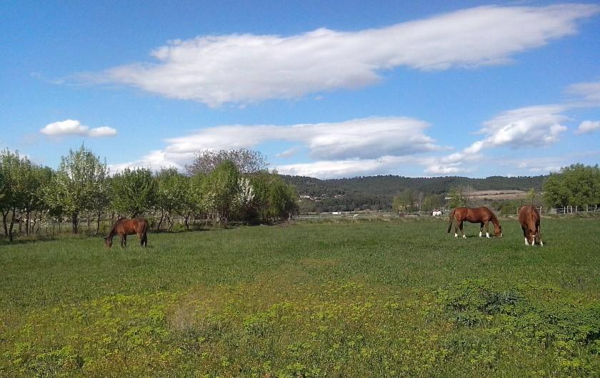 Location de vacances - Chambre d'hôtes à Villelaure - les prairies