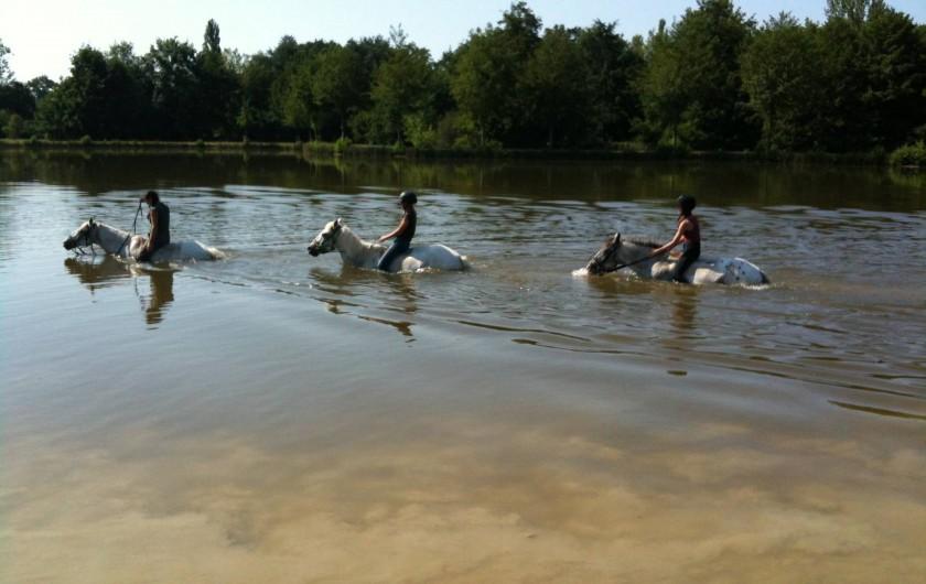 Location de vacances - Gîte à Eauze - Baignade au lac