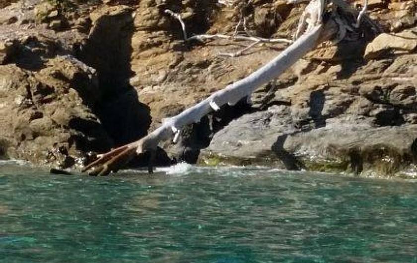 Location de vacances - Appartement à Cavalaire-sur-Mer - petites criques aux eaux turquoises