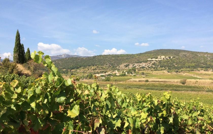 Location de vacances - Gîte à Montpeyroux - entouré de vignoble