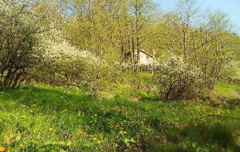 Location de vacances - Cabane dans les arbres à Grandfontaine - Paysage du site de cabanes au printemps