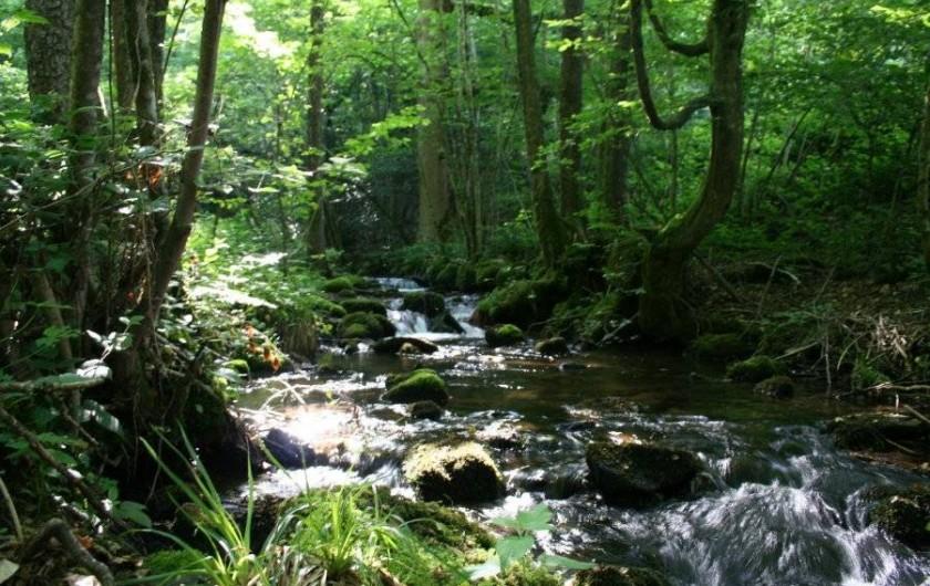 Location de vacances - Chambre d'hôtes à Le Clerjus - Le ruisseau de 1er catégorie traversant la propriété
