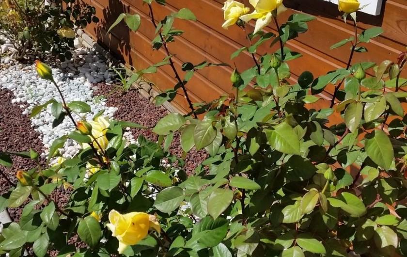 Location de vacances - Chalet à Le Tampon - Jardin fleuri et agréable pour se reposer