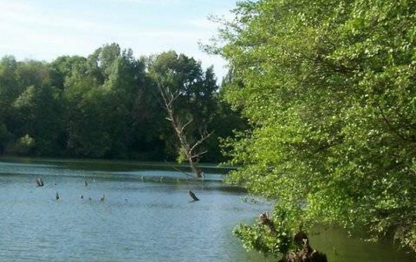 Location de vacances - Roulotte à Aniane - rivière
