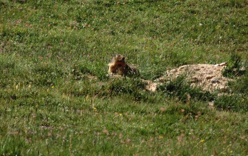 Location de vacances - Hôtel - Auberge à Lanslebourg-Mont-Cenis - Dans le Parc national de la Vanoise, découvrez la faune et flore de la région.