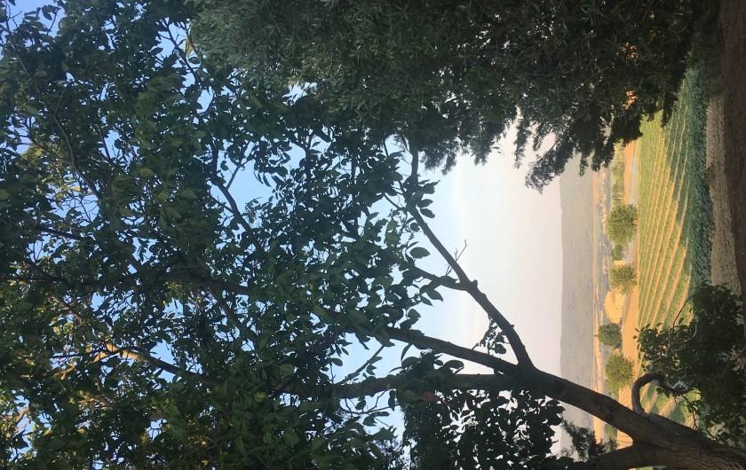 """Location de vacances - Gîte à Lurs - Vue de la terrasse du gite """"côté mas"""""""