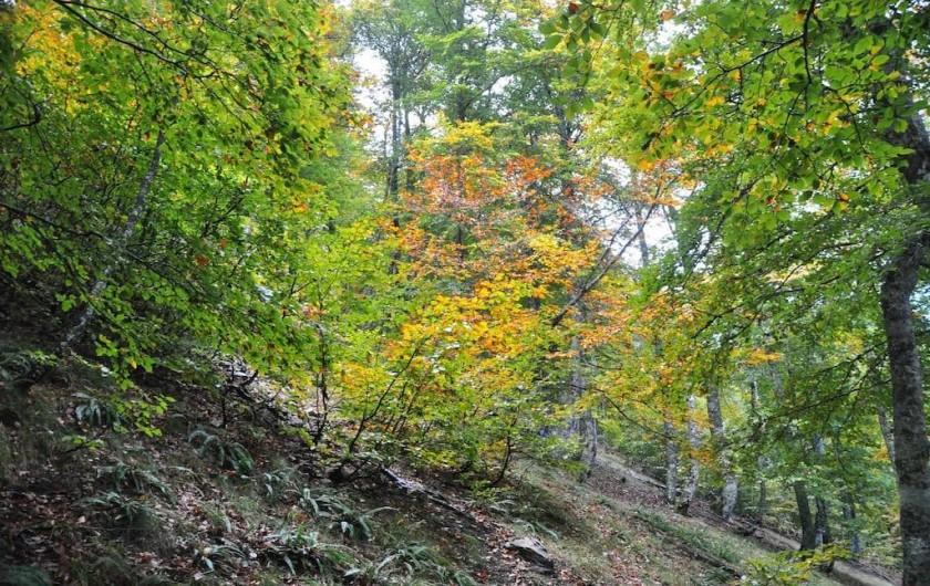 Location de vacances - Villa à Saint-Martin-de-Seignanx - forêt d'Iraty, plus grande hêtraie d'Europe où nous allons souvent