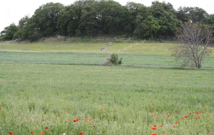 Location de vacances - Gîte à Vaunaveys-la-Rochette - Une vue sur le champ voisin