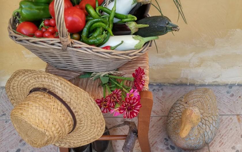 Location de vacances - Gîte à Ossages - Légumes bio de notre potager en vente sur place