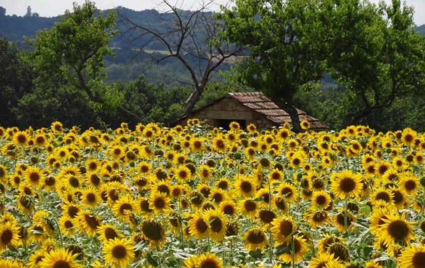 Location de vacances - Gîte à Saint-Avit-Sénieur - vue sur nos champs