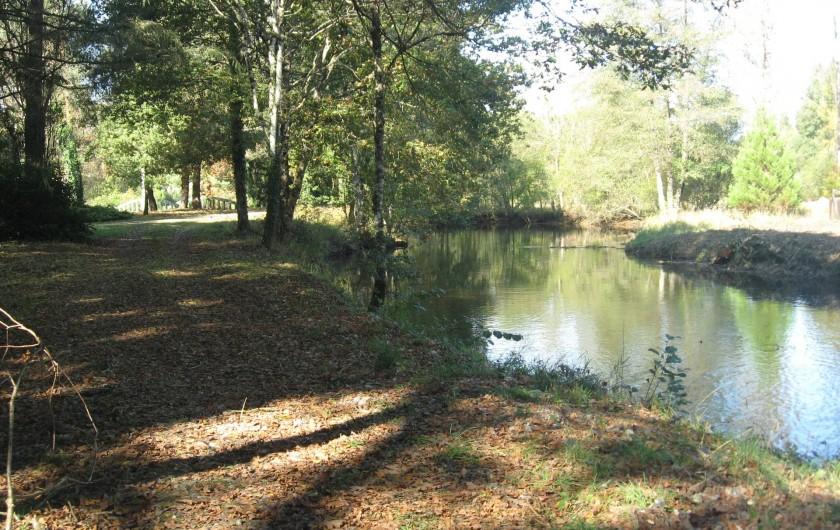 Location de vacances - Gîte à Souesmes - promenade le long de la rivière
