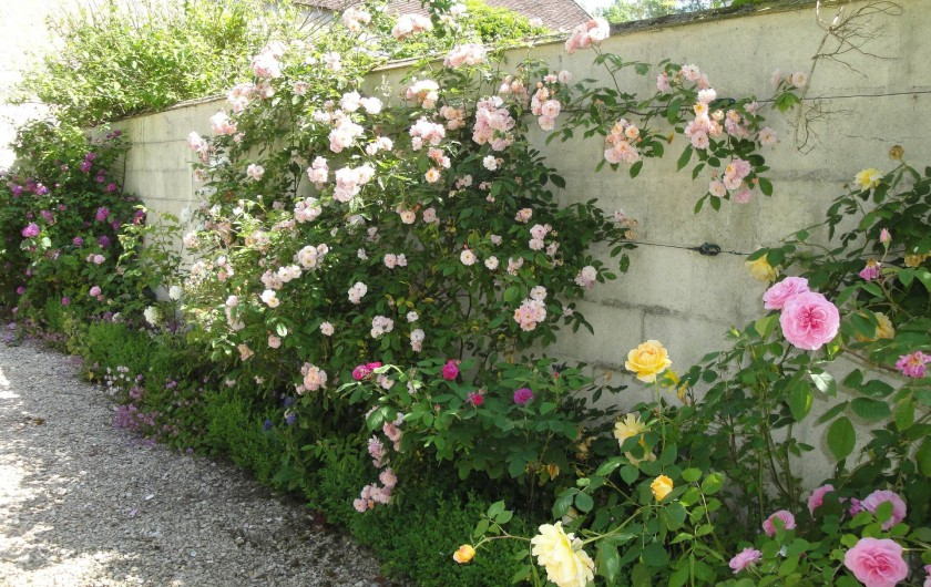 Location de vacances - Chambre d'hôtes à Saint-Loup-de-Naud - Chemin de roses