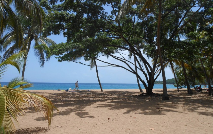 Location de vacances - Chalet à Deshaies - plage de Grand-Anse à Deshaies