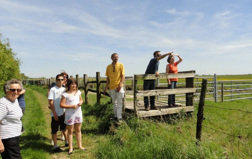 Location de vacances - Camping à Luçon - Balade dans le marais Observatoire