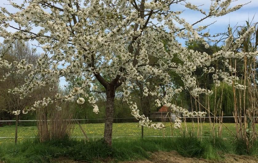Location de vacances - Villa à Berthenay - Cerisiers en fleurs au jardin