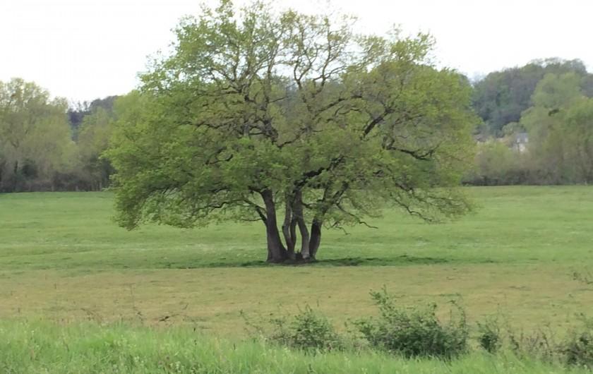 Location de vacances - Villa à Berthenay - Dans les champs alentours des arbres majestueux