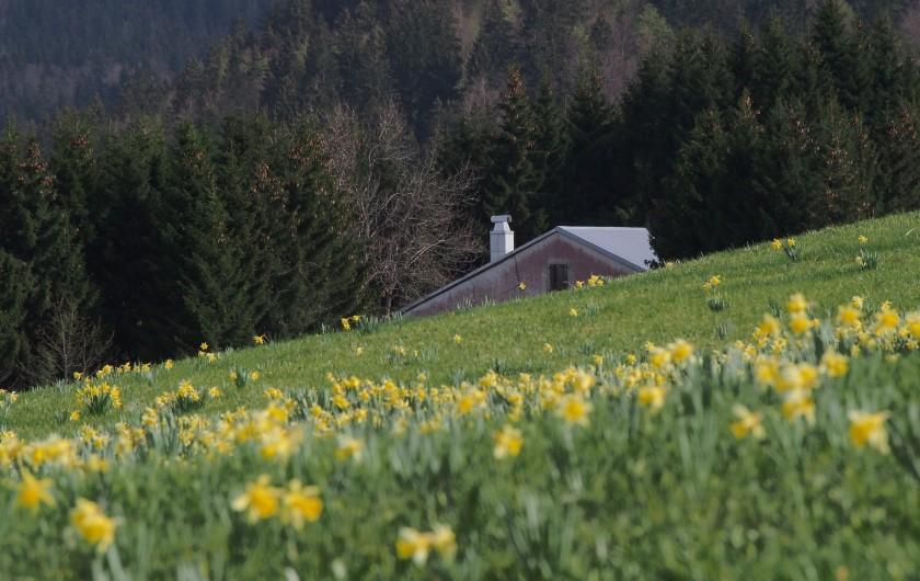 Location de vacances - Chalet à La Pesse - Une magnifique nature printanière