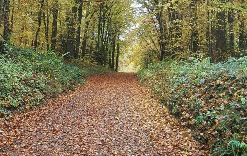 Location de vacances - Gîte à Médière - Chemin de randonnée à proximité du gîte