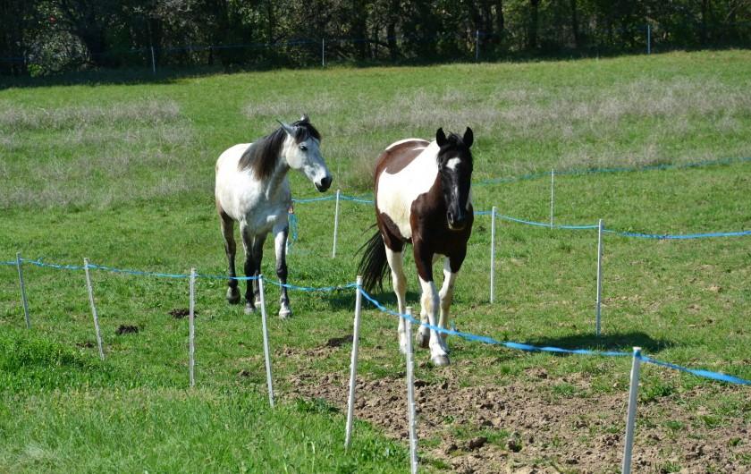 Location de vacances - Appartement à Le Teil - Nos chevaux situés a 300 m de la maison.