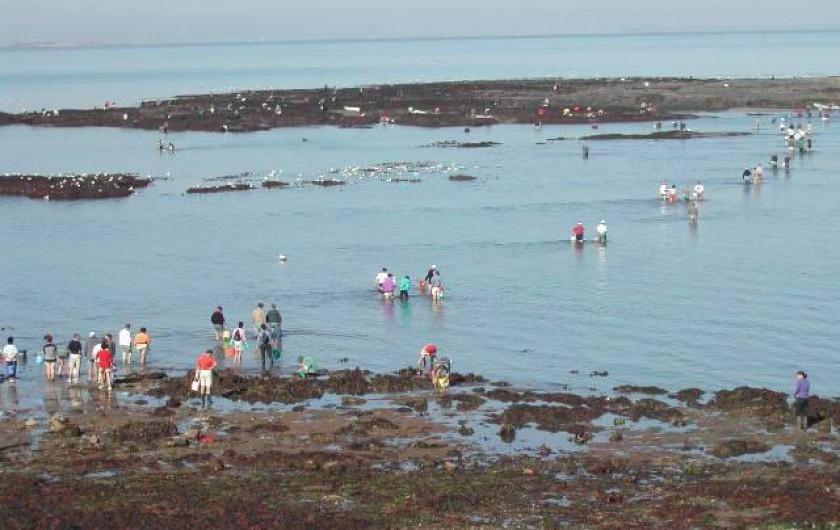 Location de vacances - Villa à Piriac-sur-Mer - SN'oubliez pas la pêche aux coquillages et crustacés lors grandes marée