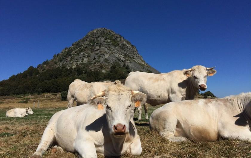 """Location de vacances - Villa à Cruas - La montagne Ardéchoise : Le gerbier de JONC   """" la source de la loire"""""""