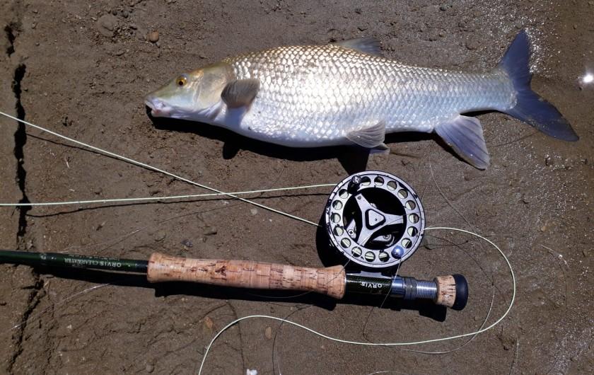 Location de vacances - Gîte à Siruela - La pesca del BARBO en La Serena.